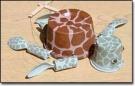 Морская черепашка-марионетка